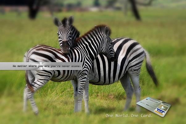 zebra-ad-01